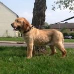 Meine erste Hundefriseur