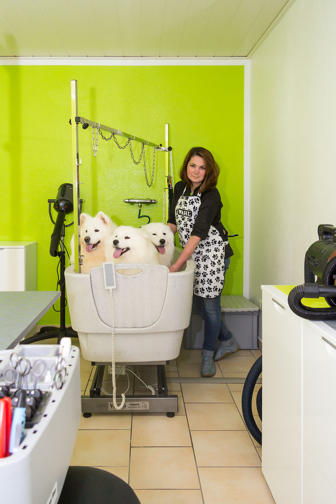 Hundesalon, Hundepflege, Katzenpflege, Meerschweinchen, Haustiere, Kleintiere