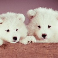 Slider 2 – Meine Hunde