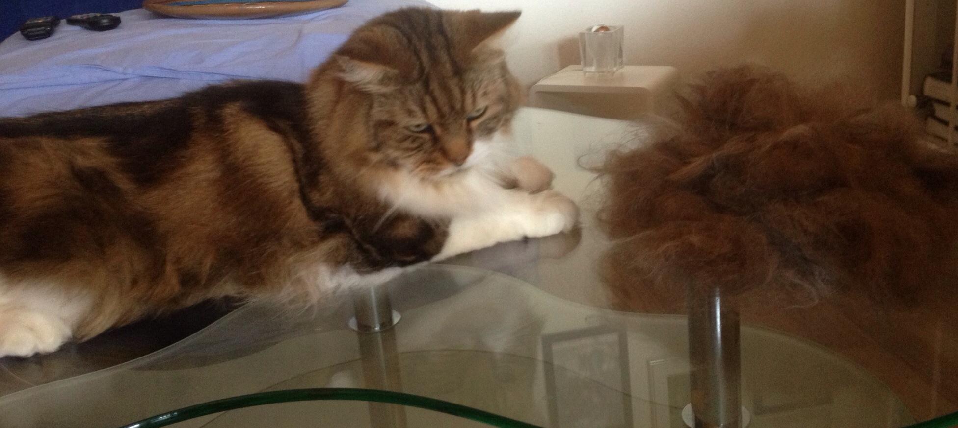 Katzenpflege katze katzen