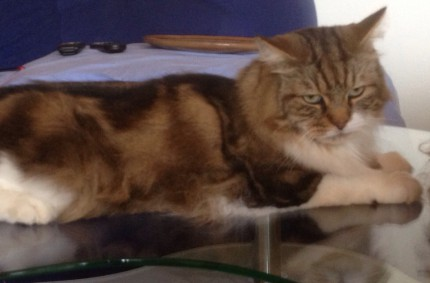 Jedes Katzentier ist ein Meisterstück der Natur Leonardo da Vinchi