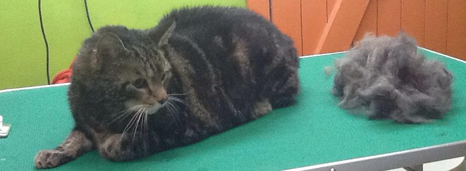 Katzenpflege katze katzensalon