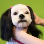 Hundefrisör-Ausbildung und Groomer-Schule