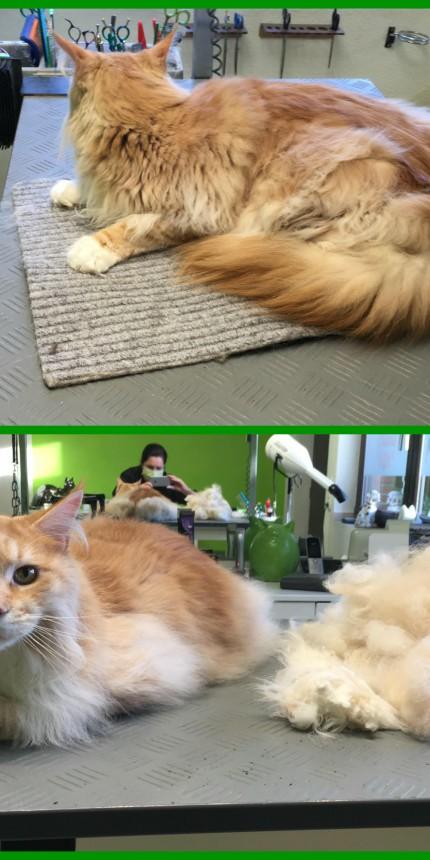 Pflege für  Katzen